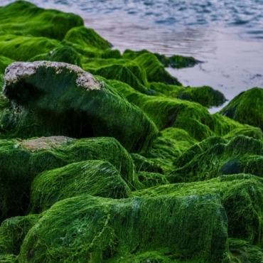 algae_750x750